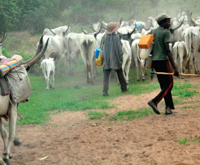 Breaking: Southwest Govs Places Ban On Open Grazing
